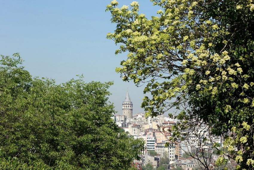 alfred_heilbronn_botanik_bahçesi_istanbul_uni